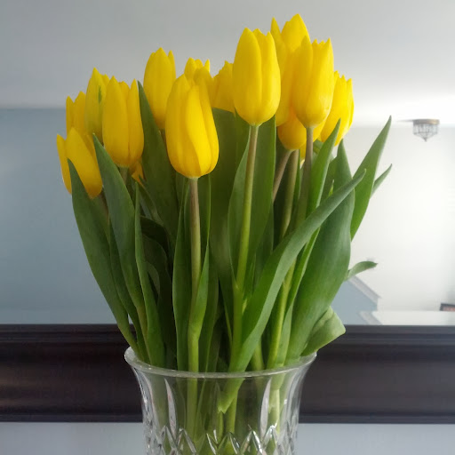 Yellow Tulips | Taste As You Go