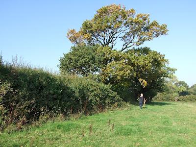 Hedgerow in Landican