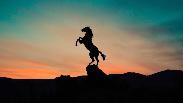 sunset horse wallpaper
