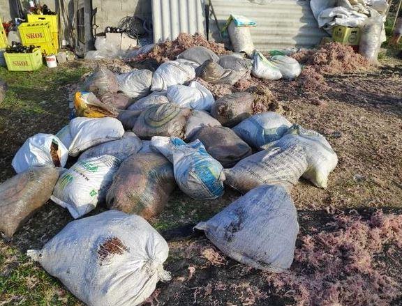 Infração ambiental de extração ilegal de musgos no bairro Subaúma em Iguape