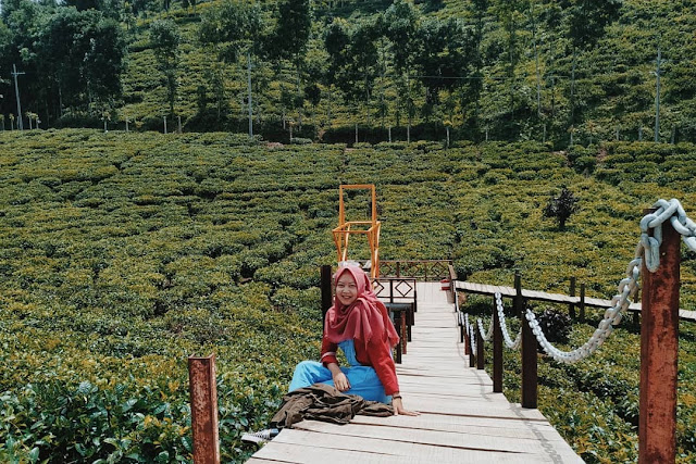 Wisata Kebun Teh Gunung Gambir Jember