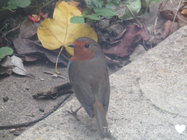 #My Sunday Photo - Robin Caught on Camera