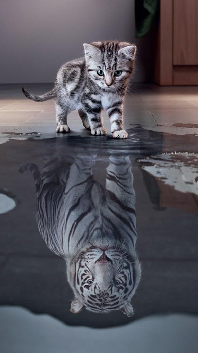 Gatinho e Tigre Imagem para Celular