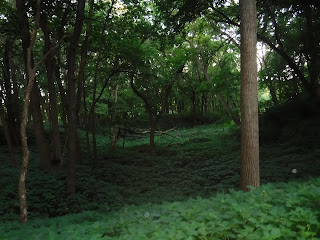 a forested area just off the main trail at Bacon Creek Park in Sioux City Iowa