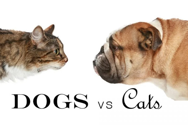 Cat vs Dog: Which Is the Best Pet for Me?