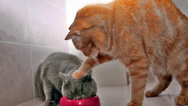 Οι κατοικίδιες γάτες σκοτώνουν έως δέκα φορές περισσότερα θήραματα στην εξοχή από τις άγριες, όταν τους επιτρέπεται να περιπλανηθούν
