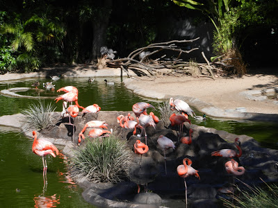 San Diego zoo flamingos pictures