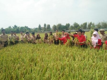 Edukasi Pertanian, 120 Pelajar se Jakarta Timur Dilibatkan Panen Padi di Cakung