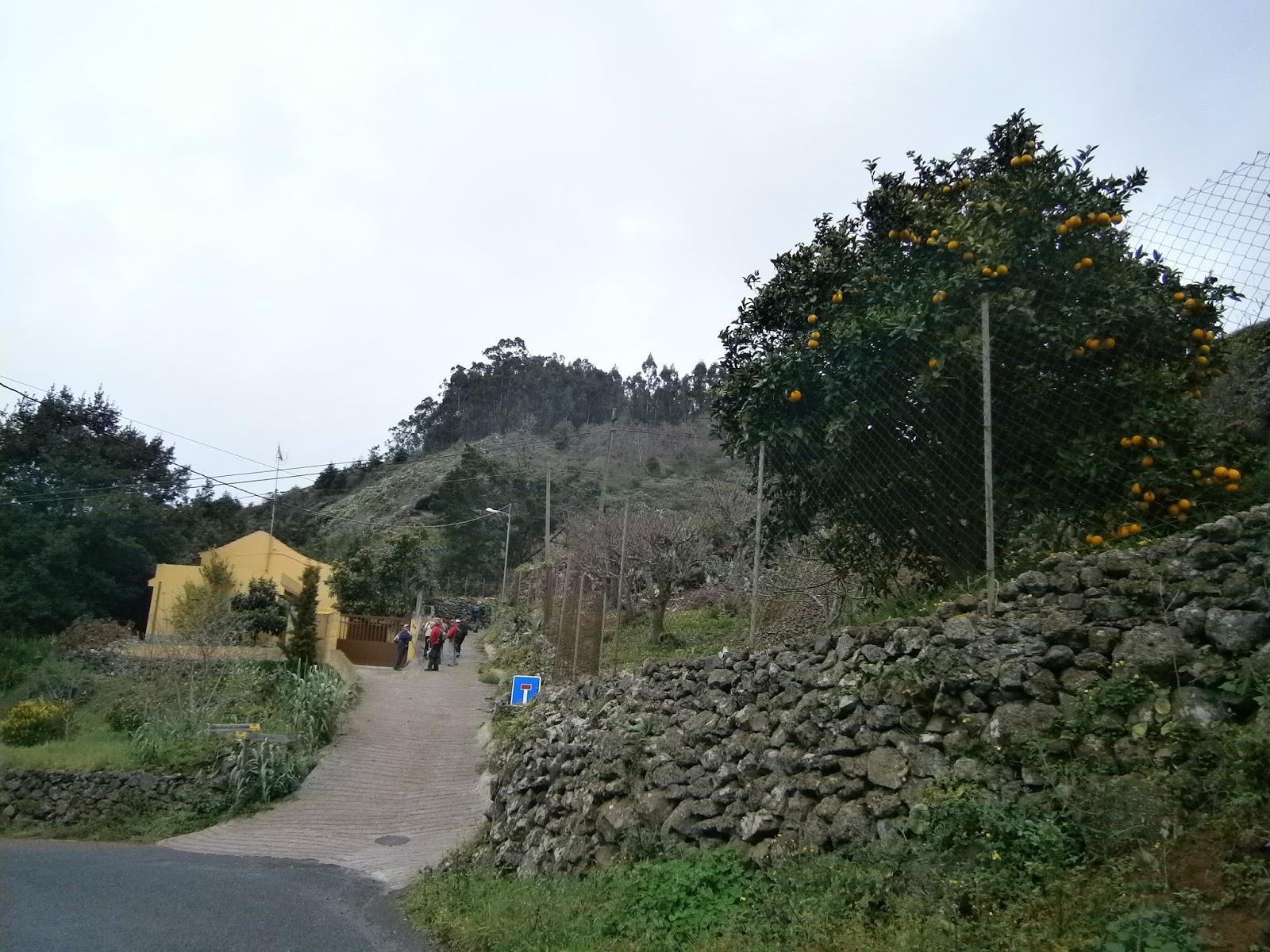 Jfemedenruta por caminos y senderos grancanarios for Calle prado redondo zamora