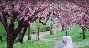 Wisata Bukit Sakura Kemiling Lampung | Indah Dan Mempesona