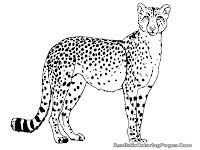 cheetah coloring pages printable
