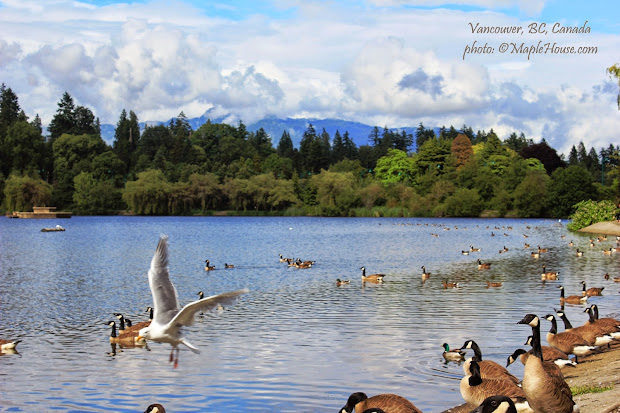 Living Vancouver Canada Stanley Park Crown Jewel