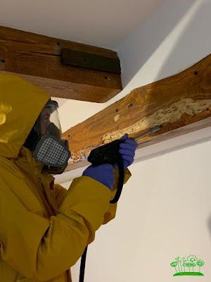 Tratamientos en vigas de madera