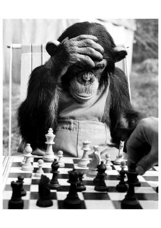 Manual de ajedrez en pdf