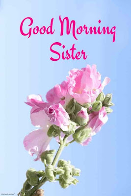 good-morning-dear-sister-images Wishes