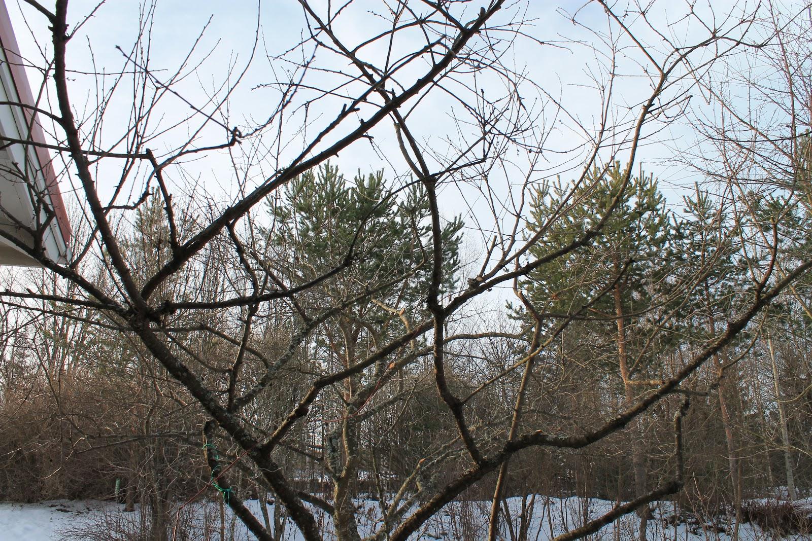 Puutohtori