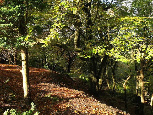 Autumn  Woods, Mount Pellon, Halifax, West Yorkshire. 2nd November 2020.
