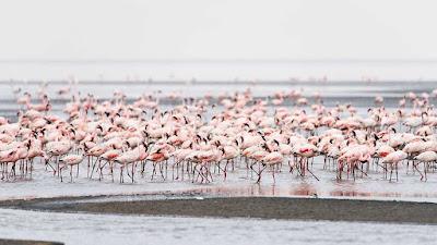 Natron_Lake_Tanzania,most_dangerous_tourist_destinations_in_the_world_most_dangerous_tourist_places_in_the_world