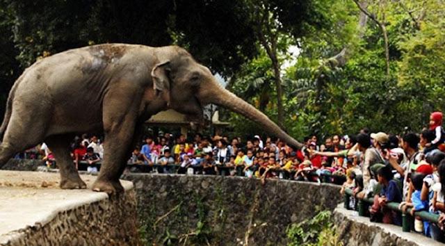 Cara Naik KRL Commuter Line ke fasilitas Kebun Binatang Ragunan