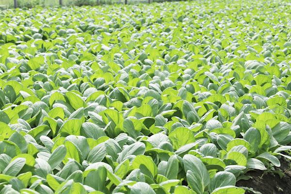 烟花颱風北偏 農糧署:蔬菜供應正常並持續關注各項農產價