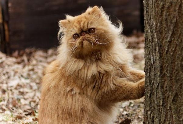 Garfield cats