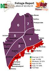 Maine Foliage Report