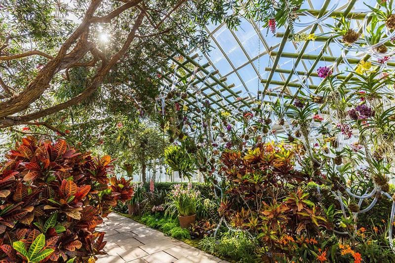 Instalación de Daniel Ost con orquídeas en el Botánico de Nueva York