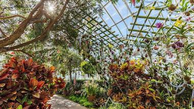 Vuelve el Festival de Orquídeas del Jardín Botánico de Nueva York
