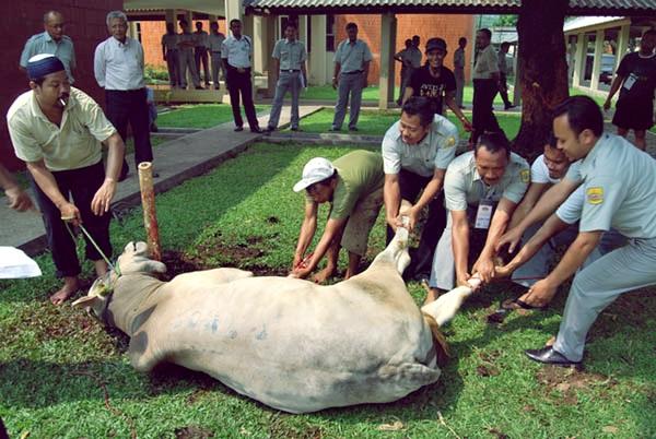 Selama Asian Games, 35 Masjid Dilarang Menampung dan Memotong Hewan