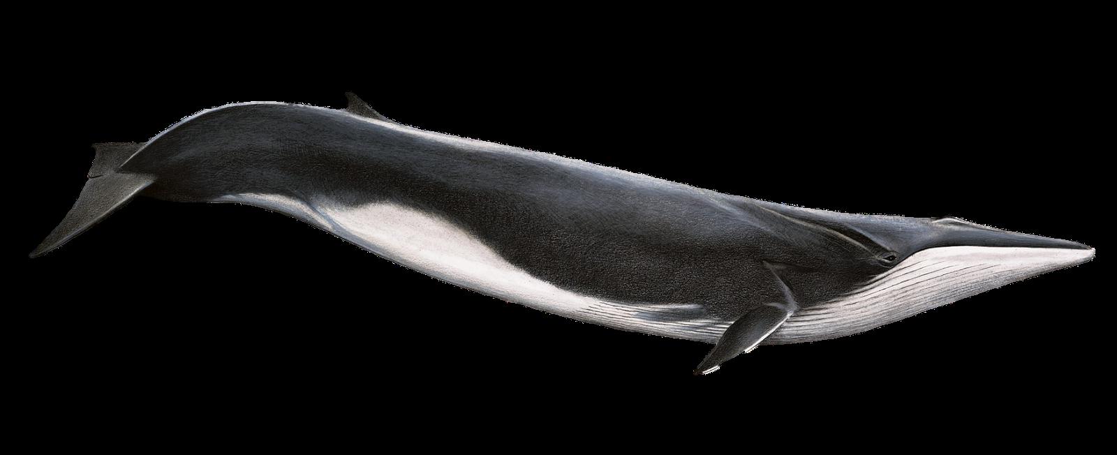 Whale Talker February 2013