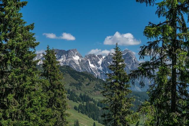 Waldwandern in Saalbach | Wanderung zu den Waldteichen am Maisereck | Saalbach - Maisalm - Wirtsalm - Waldteiche - Spielberghaus - Saalbach | Wandern-SalzburgerLand 14