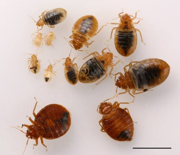 How to get rid of BED-BUGS entirely