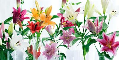 chon hoa ly dep tuoi lau