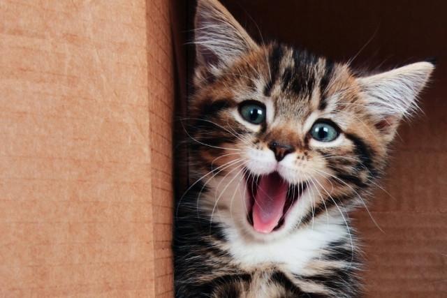 chaton-2-mois