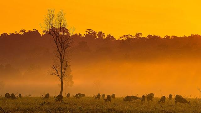 deer on a plain at dusk