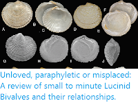 https://sciencythoughts.blogspot.com/2019/12/unloved-paraphyletic-or-misplaced.html