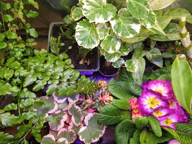 Forskjellige planter sammen i et minidrivhus
