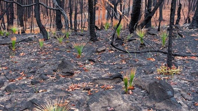 Ağaç Dikme Bayramı değil, Orman Koruma Bayramı