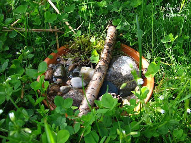 poidło dla owadów, ogród przydomowy