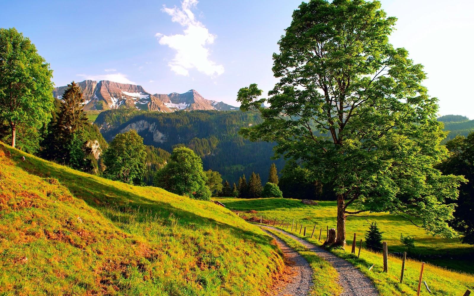 wallpaper mountain path - photo #15