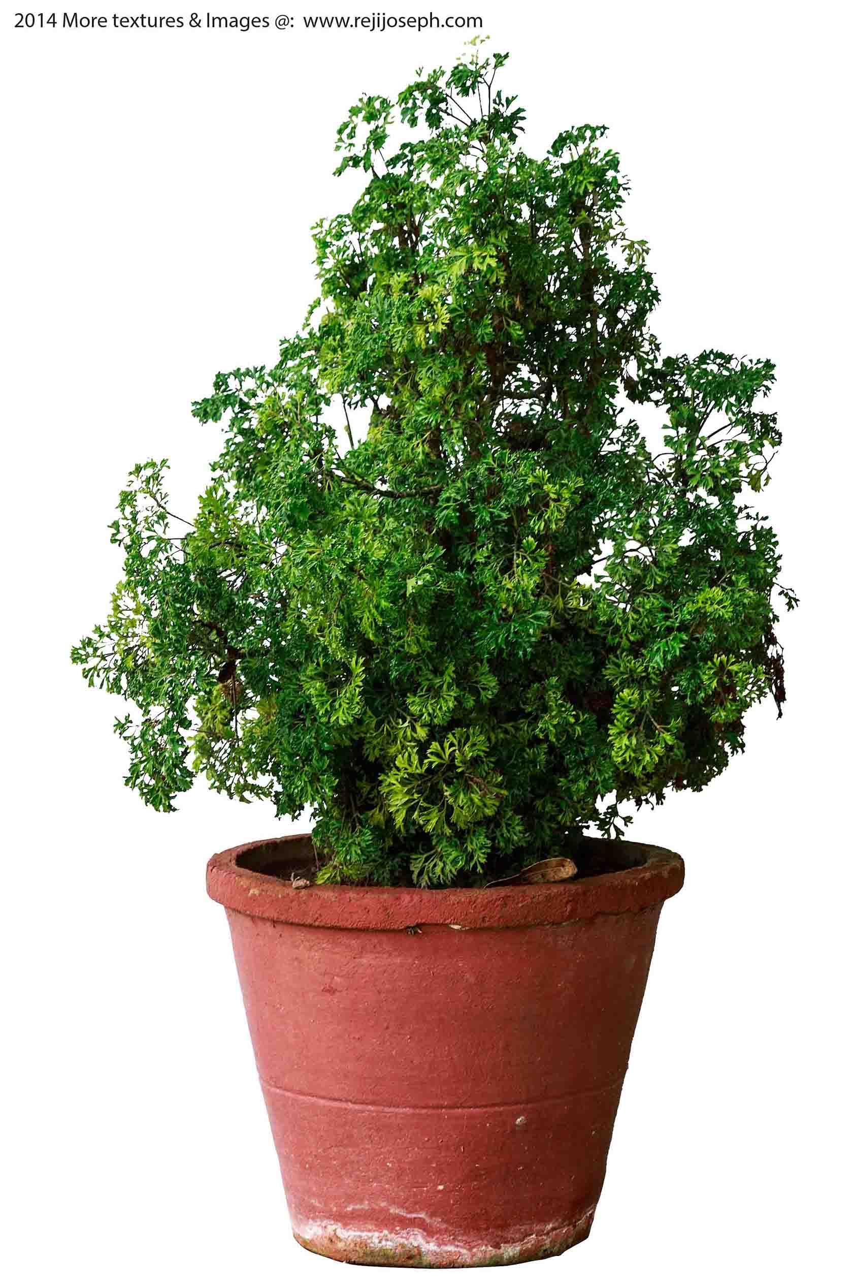Garden Plant texture 00008