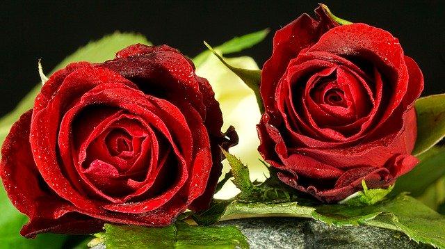 Best love shayari in Hindi for whatsapp status