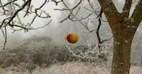 Bad apple on tree (Image Credit: Graphic Created by David McCarthy.) Click to Enlarge.