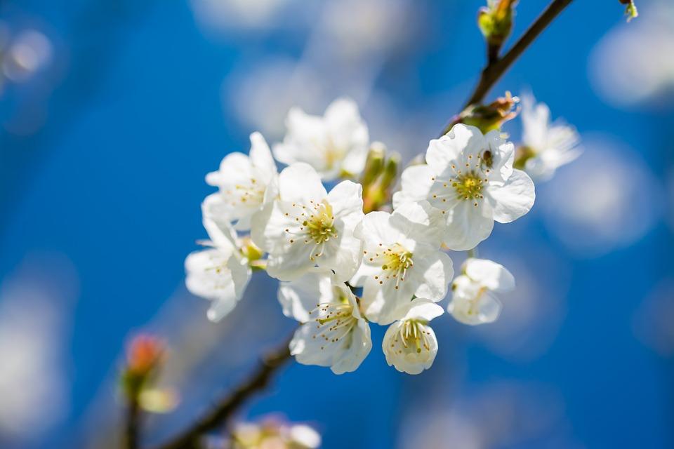 Spring Flower Images