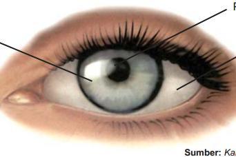 Cara Psikologi Membaca Mata (Bahasa Tubuh)
