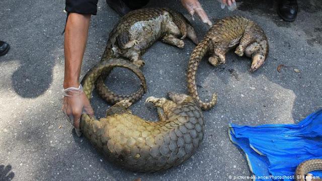 الصين: عودة الحياة لطبيعتها سابقة ومعها أسواق حيوانات برية مرعبة