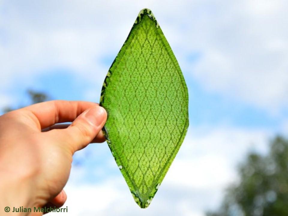 أوراق صناعية حيوية تحاكي الأوراق الطبيعية وتنتج الأوكسجين !