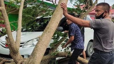 Pohon Tumbang Timpa Mobil di Tengah Jalan di Cabalu Bone