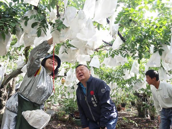 員林市肥料及果樹套袋補助 明年1月4日起受理申請