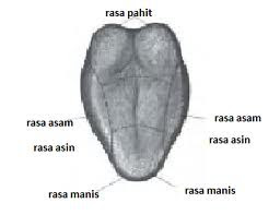 Definisi dan Fungsi Mulut